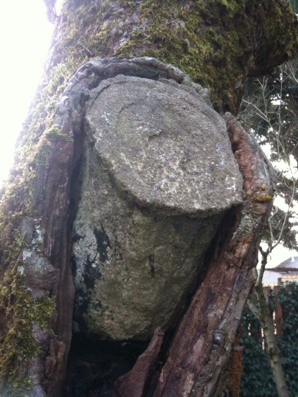 Tree Cavity Filled with Cement